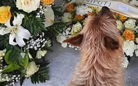 狗狗每天走3公里去見老朋友,主人得知真相後淚崩:它是去了墓地……