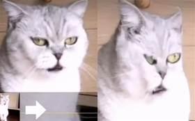 在相機面前,不是貓崩潰,就是人受罪……