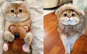 心愛小熊被搶走,貓咪立馬哭唧唧守護小熊:它是我的,不要動啦~