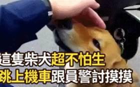 狗子迷路後跳上警車求助:快幫我找找主人……