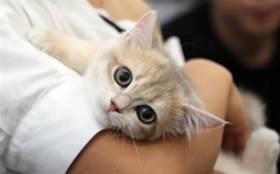 小貓咪能有什麼壞心眼呢,它只是沒良心罷了