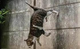 難道這就是傳說中的輕功貓?