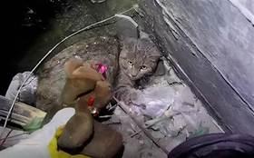 流浪貓被困在天井裡長達3個月,而它跳下去的原因,原本可以避免