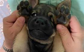 殘酷無情的制毒大漢,在刑滿出獄後竟然被一條狗改變了生命...