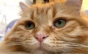 貓:你去好好上班吧,我在家睡覺等你