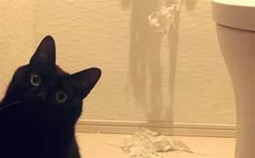 黑貓抓爛衛生紙,奴才曬出作案照引網友炮轟:不許給我罵它!