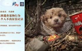 狗狗們有救了!人大代表建議立法反虐待動物,將遺棄寵物行為納入個人不良征信記錄!