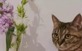 你以為你在養貓?出現這幾種行為,說明很可能貓咪在養你哦!