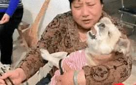 奶奶將狗狗抱在懷裡,用筷子夾起麵條往它嘴裡喂,滿滿的愛呀!