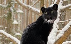 黑豹被拋棄,安排狗照顧,越長大眼神越不對勁!