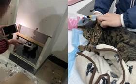 有時候,貓胖一點關鍵時刻能救命!
